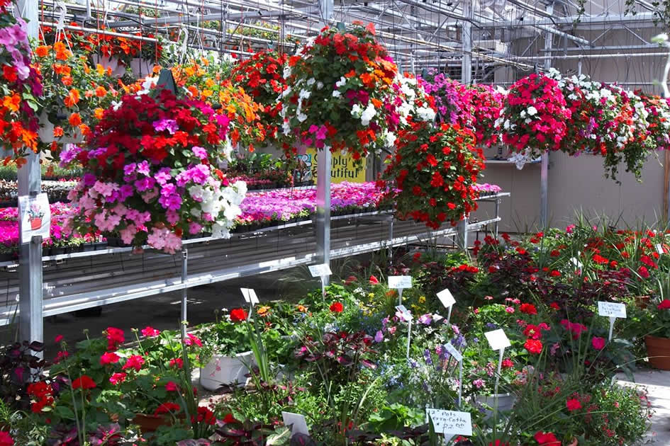 Pictures Of Large Hanging Flower Baskets : Robson s greenhouse what in season hanging baskets